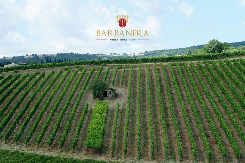 Eno-turismo: Montepulciano e Montalcino incoronate da Forbes